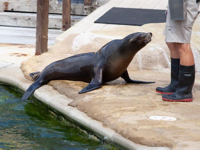 Guardiano-di-zoo-e-bioparchi