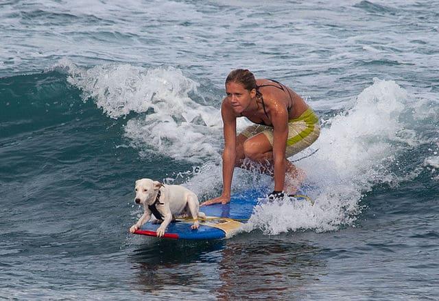 Istruttore-di-surf-per-cani