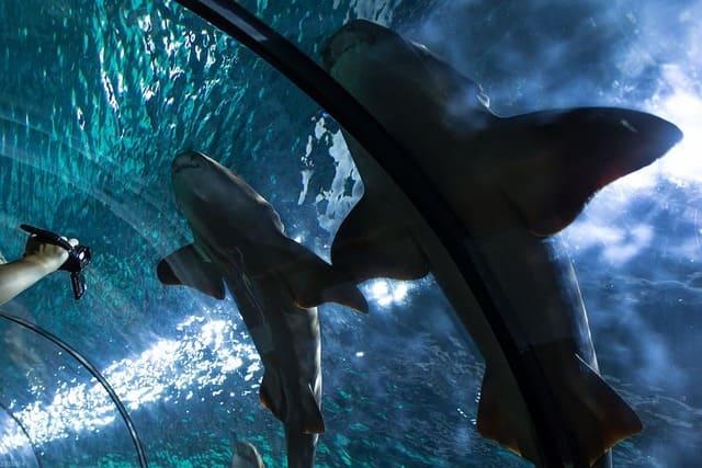 Pulitore-della-vasca-degli-squali